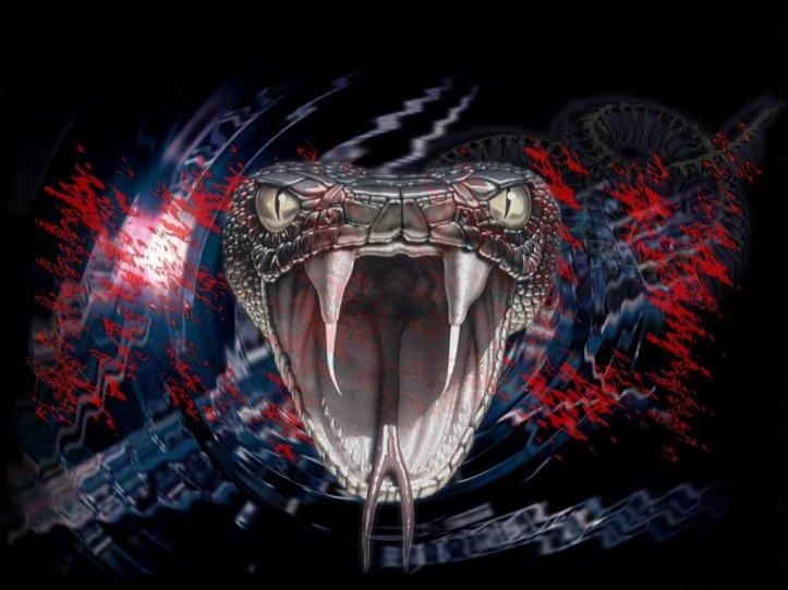snake-fangs-venom-poison-wallpaper