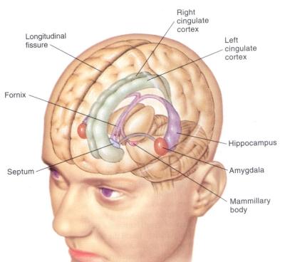 amygdala-fear-center-400px