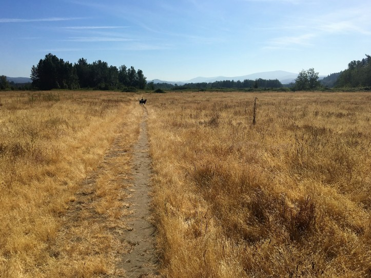 2017 07-27 2 Meadow.JPG